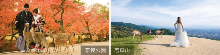 奈良拍攝景點