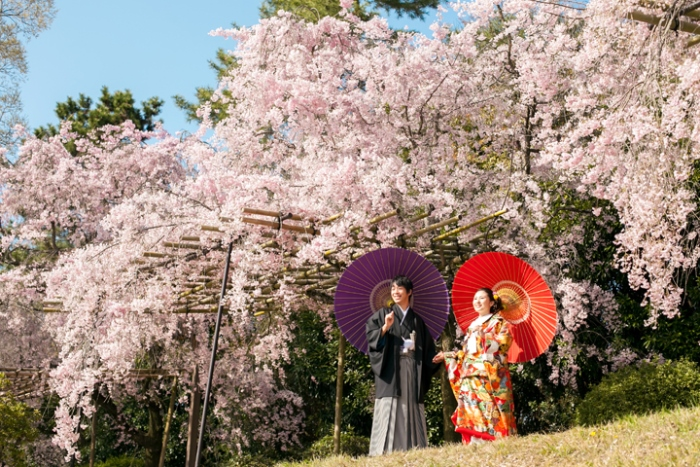 Sakura Photos