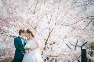 京都好日婚紗禮服櫻花婚照
