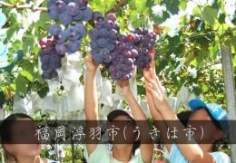 福岡摘水果