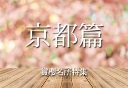 賞櫻特集京都篇